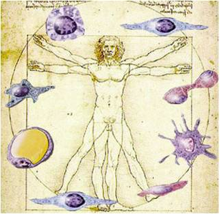 History of stem cell research controversy